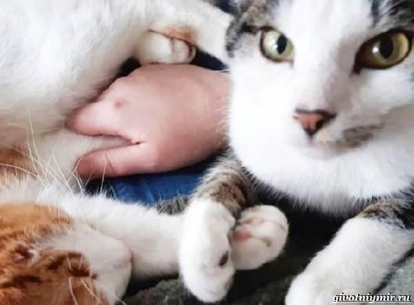 История-о-добром-мурлыке-который-помог-котёнку-обрести-дом-4