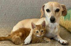 История о доброй собаке Коне, которая помогает бездомным котятам