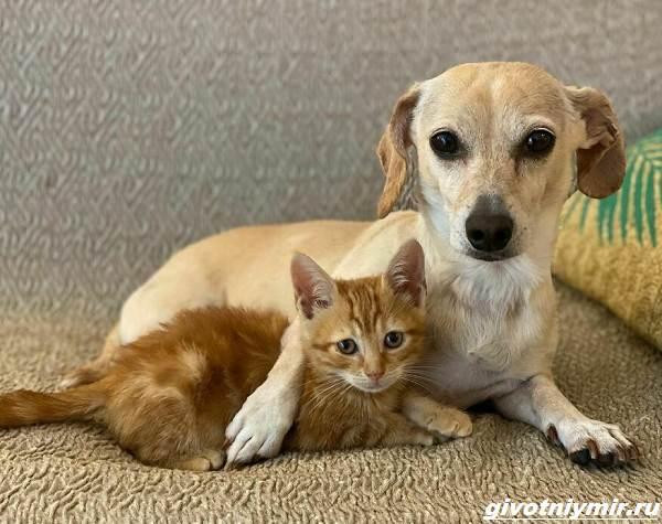 История-о-доброй-собаке-Коне-которая-помогает-бездомным-котятам-1