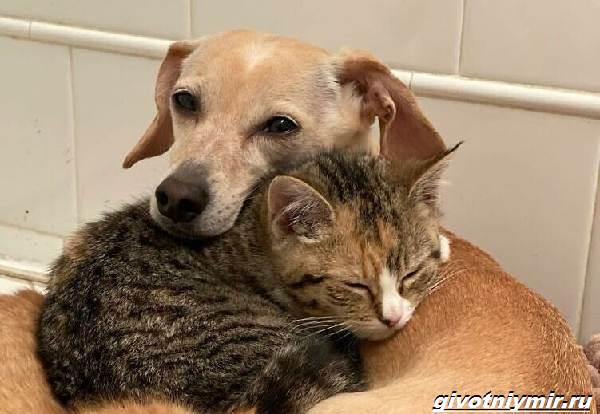 История-о-доброй-собаке-Коне-которая-помогает-бездомным-котятам-2