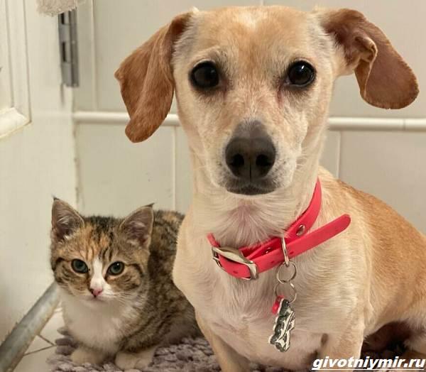 История-о-доброй-собаке-Коне-которая-помогает-бездомным-котятам-3
