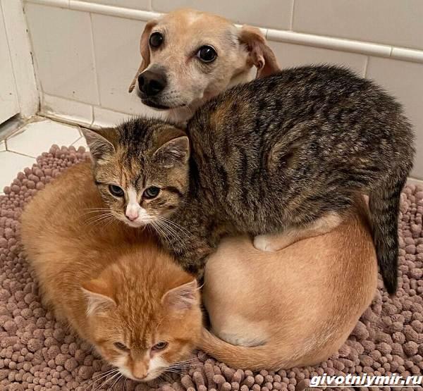 История-о-доброй-собаке-Коне-которая-помогает-бездомным-котятам-4