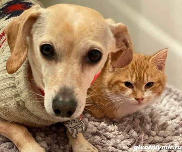 История-о-доброй-собаке-Коне-которая-помогает-бездомным-котятам-5
