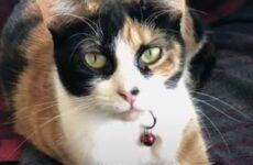 История о кошечке, которая спасла хозяевам жизнь благодаря странному поведению