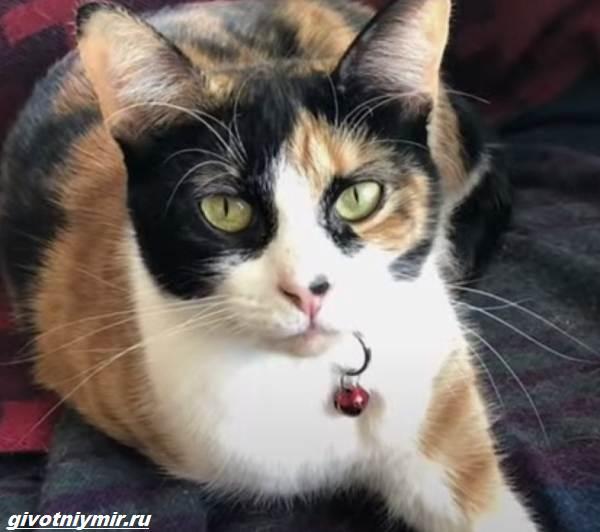 История-о-кошечке-которая-спасла-хозяевам-жизнь-благодаря-странному-поведению-1