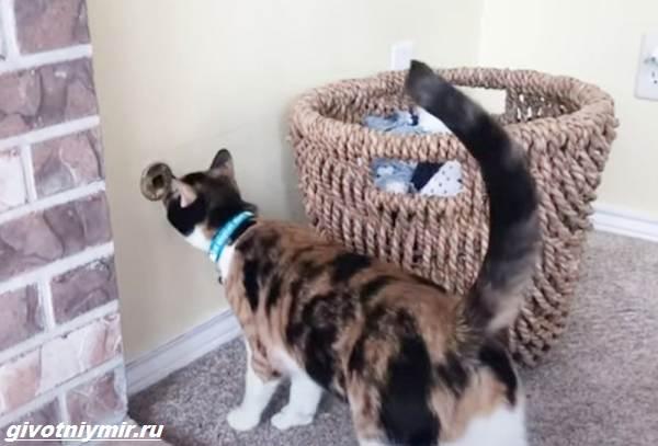 История-о-кошечке-которая-спасла-хозяевам-жизнь-благодаря-странному-поведению-3