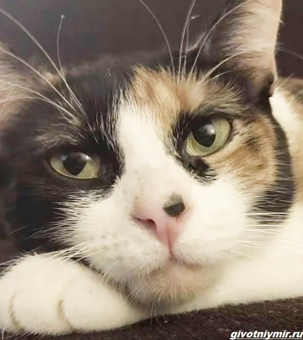 История-о-кошечке-которая-спасла-хозяевам-жизнь-благодаря-странному-поведению-4
