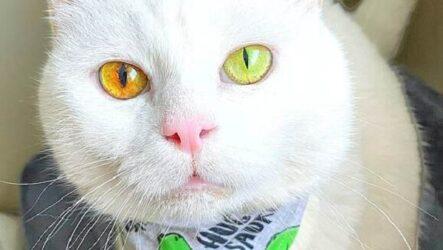История о кошке Айвори с невероятным цветом глаз