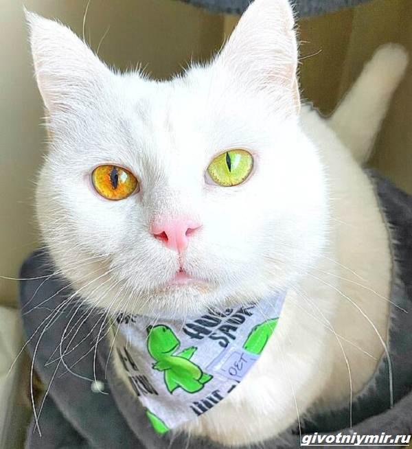 История-о-кошке-Айвори-с-невероятным-цветом-глаз-1
