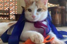 История о кошке, которая обожает плавать в море