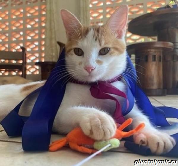 История-о-кошке-которая-обожает-плавать-в-море-1
