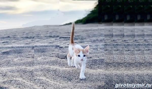 История-о-кошке-которая-обожает-плавать-в-море-3