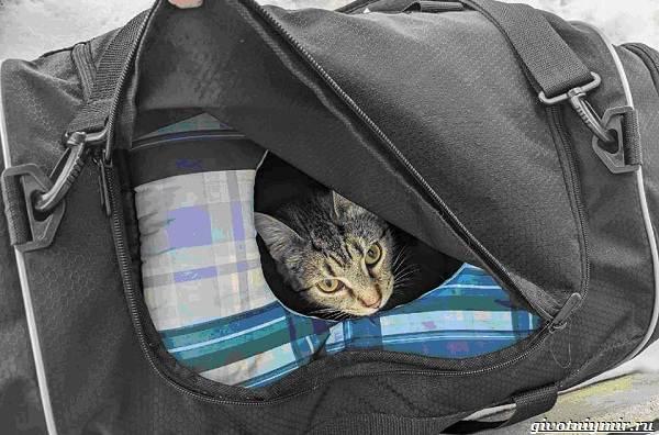 История-о-кошке-с-котятами-из-подозрительной-сумки-2