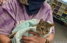 История о кошке с котятами из «подозрительной» сумки