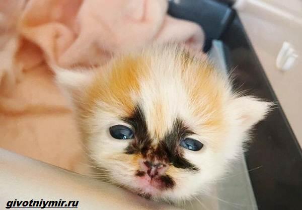 История-о-кошке-с-необычным-окрасом-и-её-сестричке-которые-нашли-своё-счастье-1