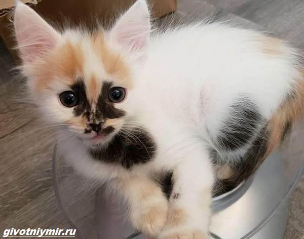 История-о-кошке-с-необычным-окрасом-и-её-сестричке-которые-нашли-своё-счастье-2