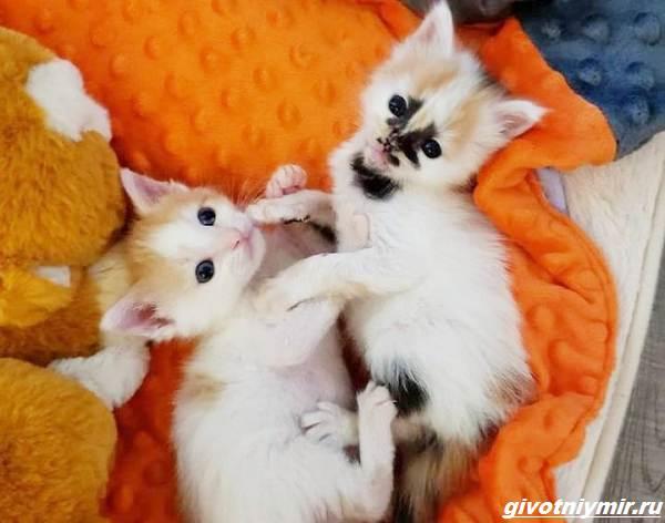 История-о-кошке-с-необычным-окрасом-и-её-сестричке-которые-нашли-своё-счастье-3