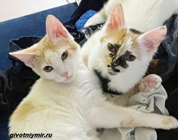 История-о-кошке-с-необычным-окрасом-и-её-сестричке-которые-нашли-своё-счастье-5