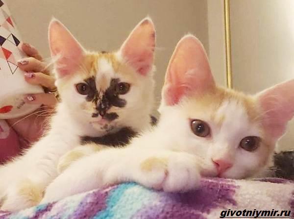 История-о-кошке-с-необычным-окрасом-и-её-сестричке-которые-нашли-своё-счастье-6