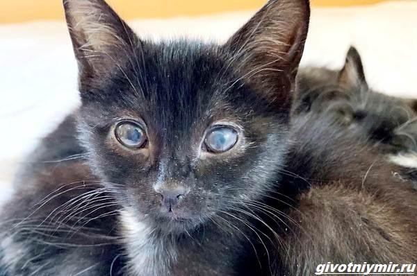 История-о-котёнке-который-попал-в-забавную-ситуацию-со-сливками-2