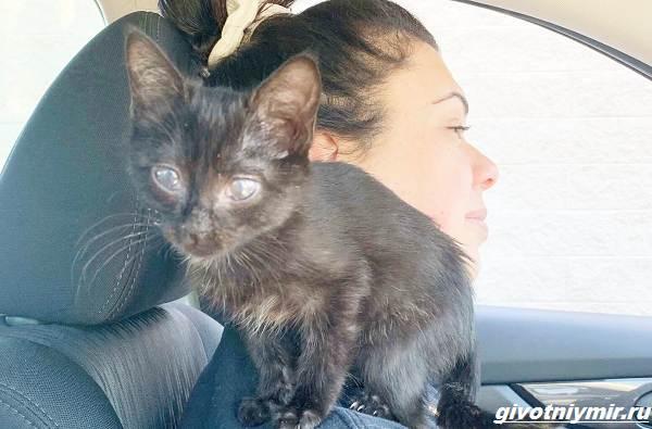 История-о-котёнке-который-попал-в-забавную-ситуацию-со-сливками-3