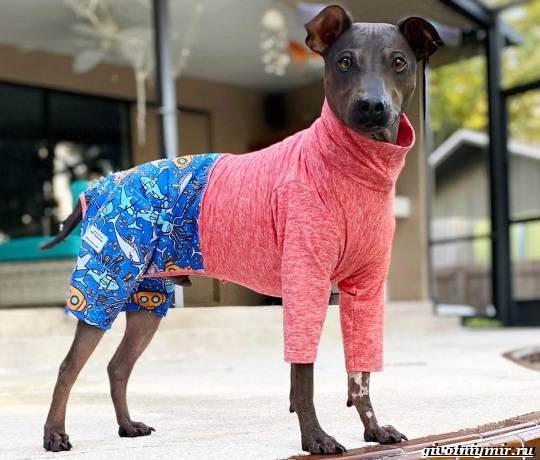 История-о-необычной-бесшерстной-собаке-которую-многие-считают-больной-2