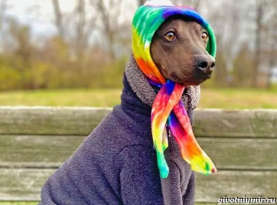 История-о-необычной-бесшерстной-собаке-которую-многие-считают-больной-3