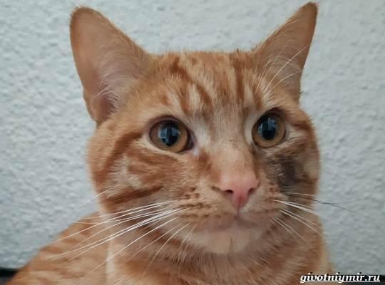 История-о-рыжем-коте-который-сбежал-от-хозяев-чтобы-вернуться-в-старый-дом-1