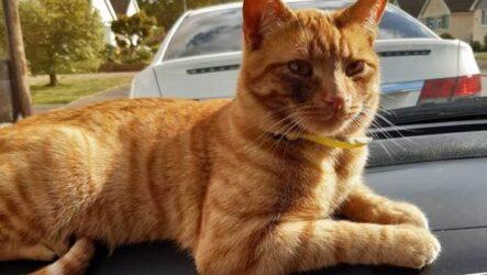 История о рыжем коте, который сбежал от хозяев, чтобы вернуться в старый дом