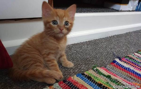 История-о-рыжем-коте-который-сбежал-от-хозяев-чтобы-вернуться-в-старый-дом-4
