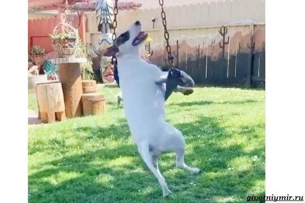 История-о-собачке-которая-обожает-кататься-на-качелях-2