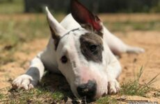История о собачке, которая обожает кататься на качелях