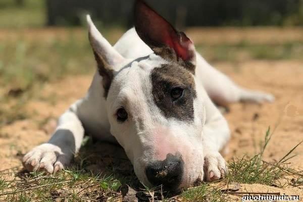 История-о-собачке-которая-обожает-кататься-на-качелях-4
