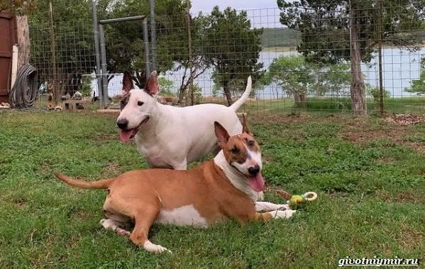 История-о-собачке-которая-обожает-кататься-на-качелях-5