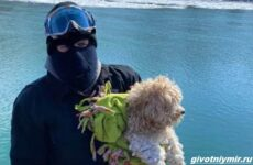 История о собаке, которая 4 дня провела у замёрзшей реки