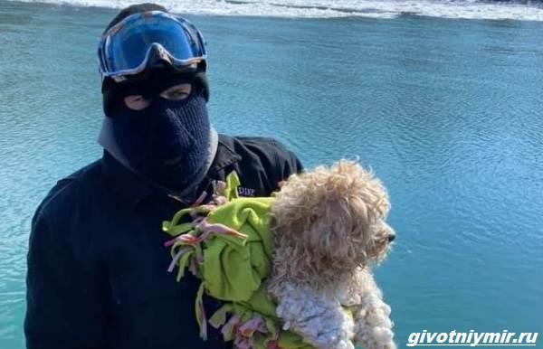 История-о-собаке-которая-4-дня-провела-у-замёрзшей-реки-1