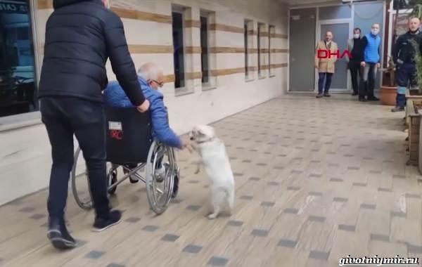 История-о-собаке-которая-6-дней-ждала-хозяина-под-больницей-2