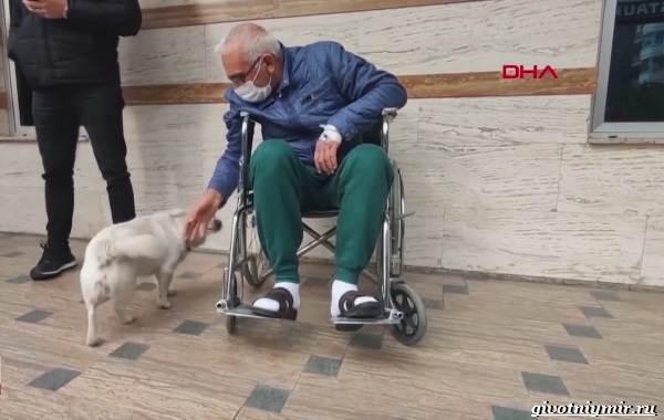 История-о-собаке-которая-6-дней-ждала-хозяина-под-больницей-4