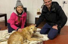 История о собаке, которую отыскали в горах спустя две недели