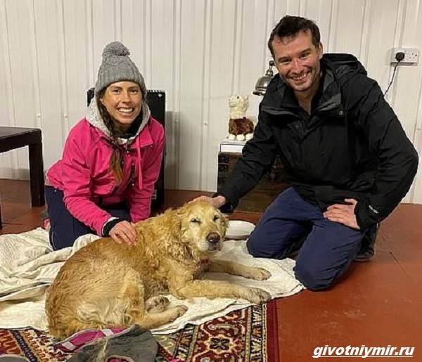История-о-собаке-которую-отыскали-в-горах-спустя-две-недели-1