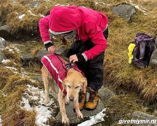 История-о-собаке-которую-отыскали-в-горах-спустя-две-недели-2