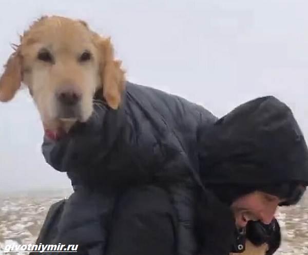 История-о-собаке-которую-отыскали-в-горах-спустя-две-недели-3