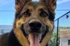 История о спасённой собаке, которая не позволила умереть своему хозяину