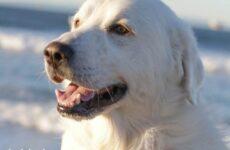 История об испуганной собаке, которая стала добрым питомцем