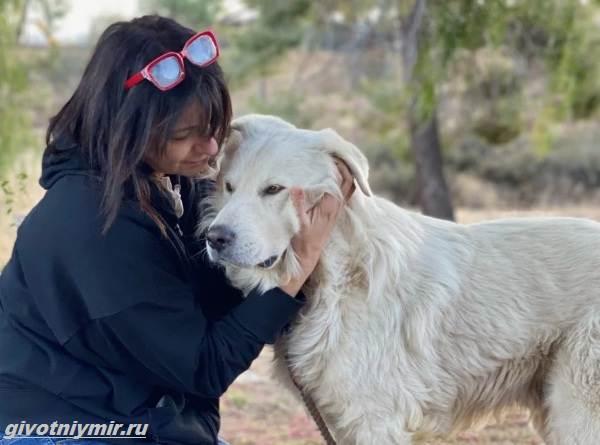 История-об-испуганной-собаке-которая-стала-добрым-питомцем-2