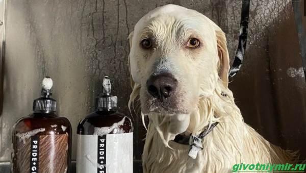 История-об-испуганной-собаке-которая-стала-добрым-питомцем-4