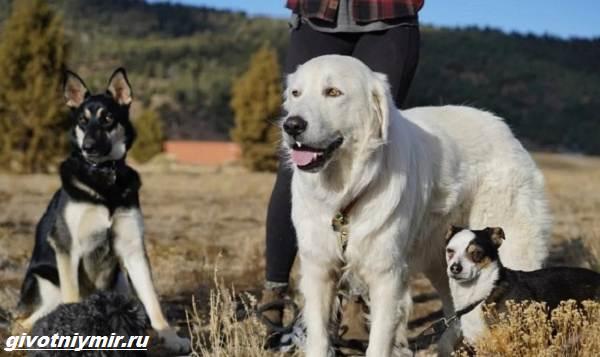 История-об-испуганной-собаке-которая-стала-добрым-питомцем-5