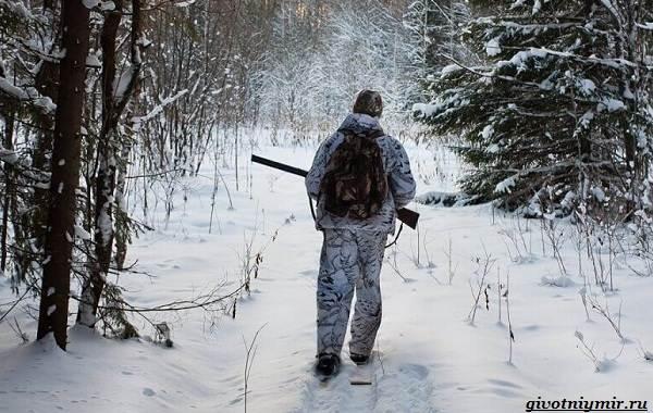 Охота-зимой-на-разных-зверей-и-её-особенности-1