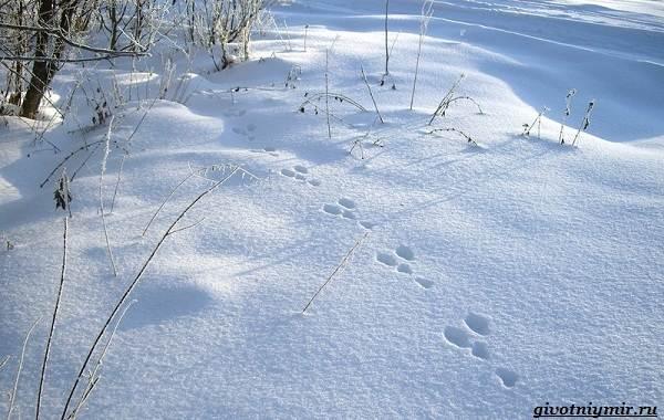 Охота-зимой-на-разных-зверей-и-её-особенности-2
