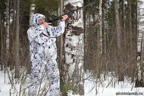 Охота-зимой-на-разных-зверей-и-её-особенности-3